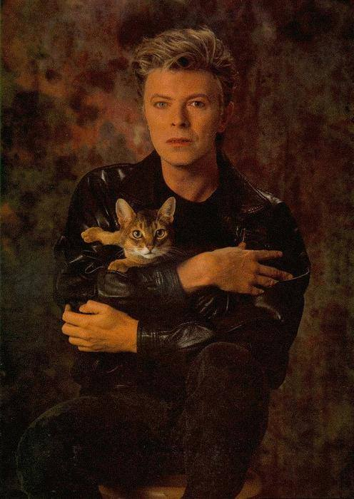 David Bowie with cat